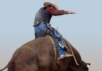Rodeo Bull riding