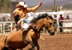 Bareback Bronc School