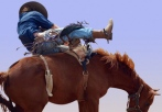 Bareback Bronc Riding