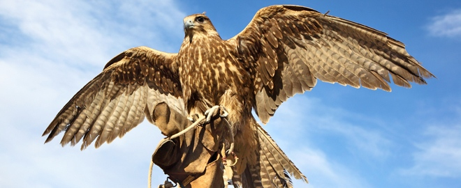 Nature and eco falconry experience white sulphur springs adult