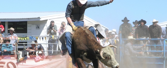 Bull Fighting School