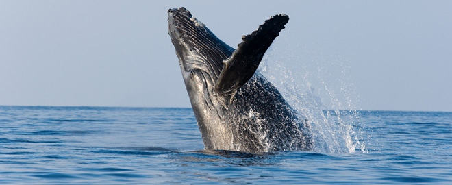 whale watching in los angeles california