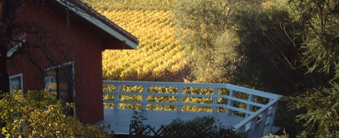 Healdsburg wine tour
