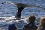 see the whales in california