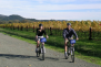calistoga bike tour