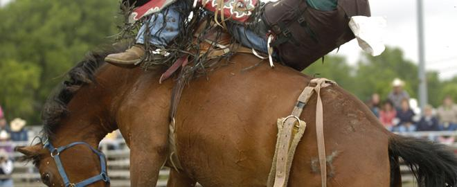 Saddle Bronc School Houston Great American Days